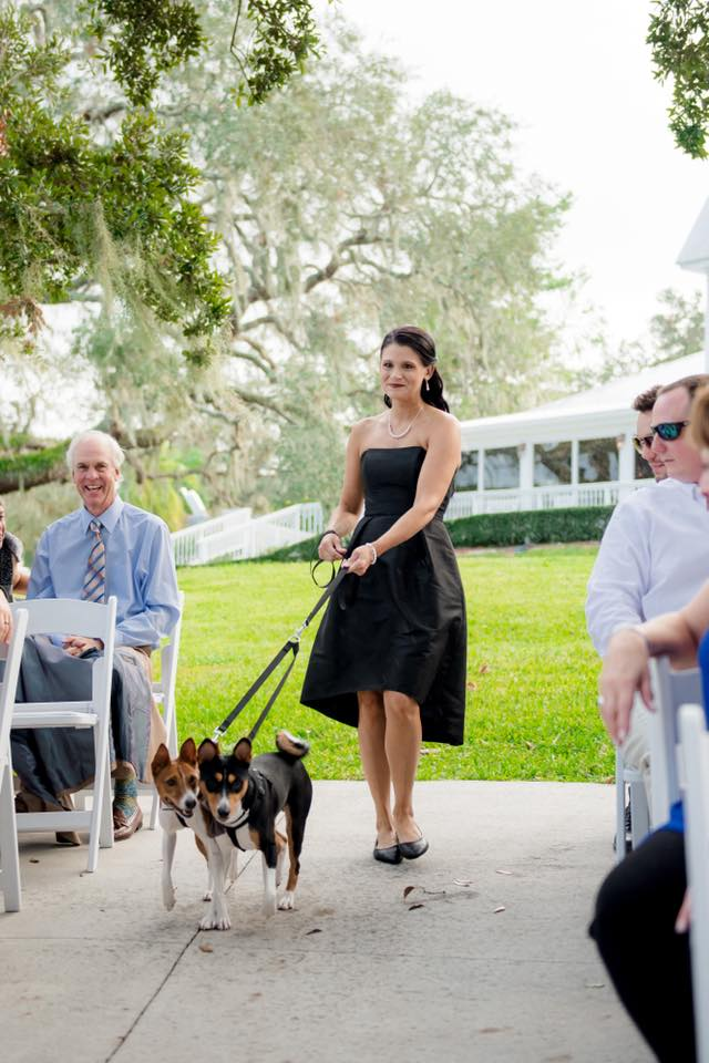 Pet attendant walking the couple's dogs down the aisle