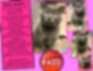 Screen Shot 2020-06-21 at 2.11.03 PM.png
