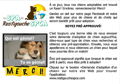 No dogs right now - French.png