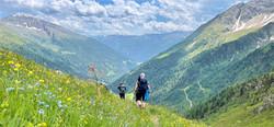 Alpentraversale Wildflowers