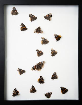 Found Moths