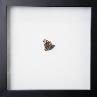 Found Moth 3