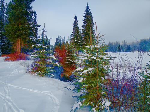 Alberta Winterscape