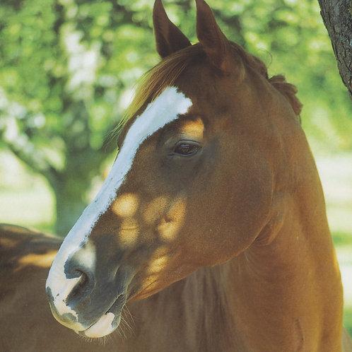 White Stripe horse print