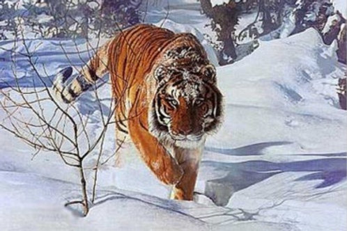 Tyger! Tyger! - Lithography By Terry Isaac