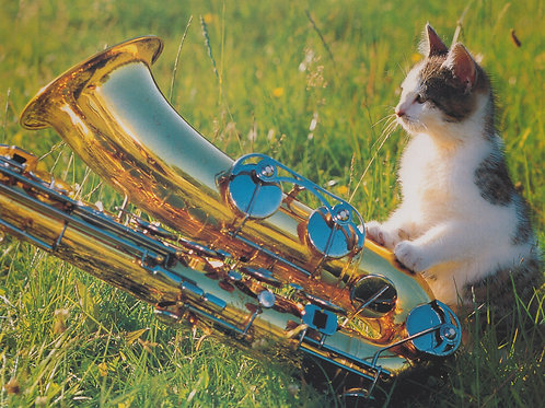 Saxophone cat