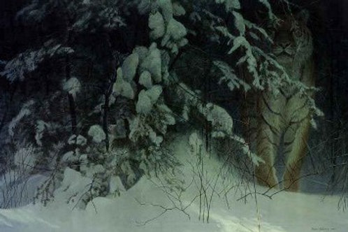 Siberian Night - Lithograph By Robert Bateman