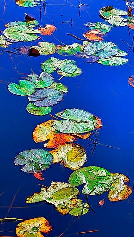 lilypath edmonton canvas fine art printing