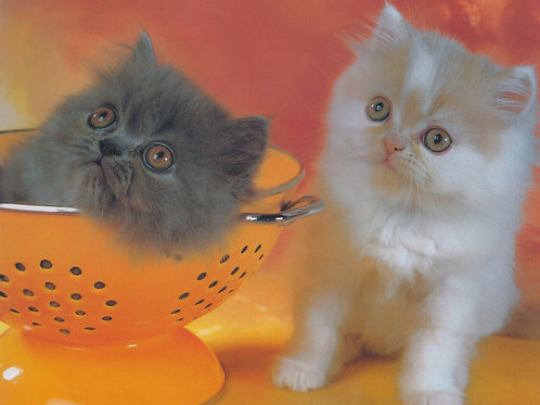 Opposite Cats