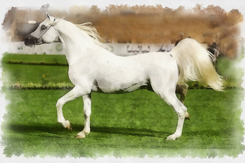 White Horse Trot. Fine Art Print by Andrew Andrychowski