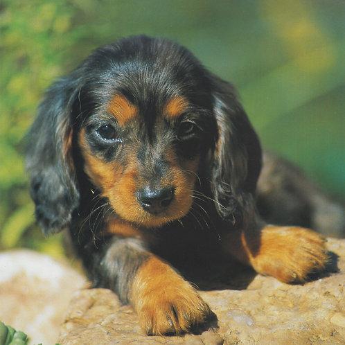 Curious pup