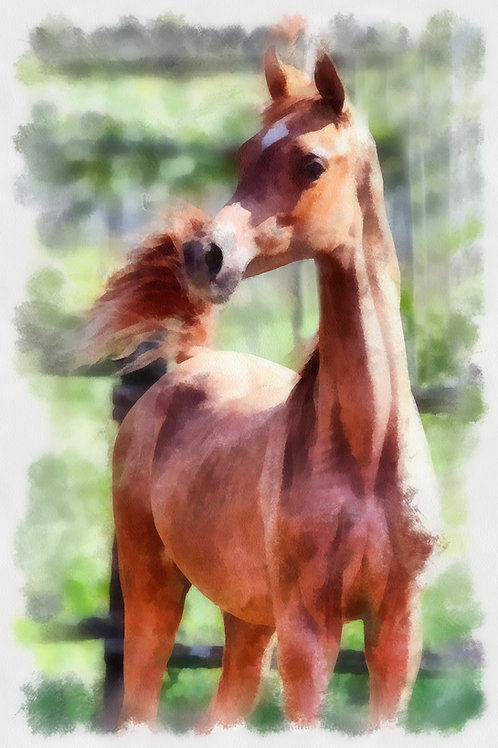 Curious Horse. Fine Art Print by Andrew Andrychowski