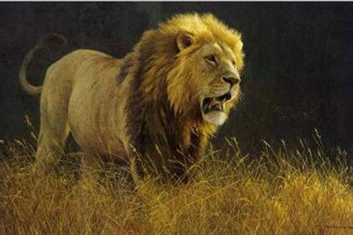 Into the Light - Lion - Lithograph By Robert Bateman