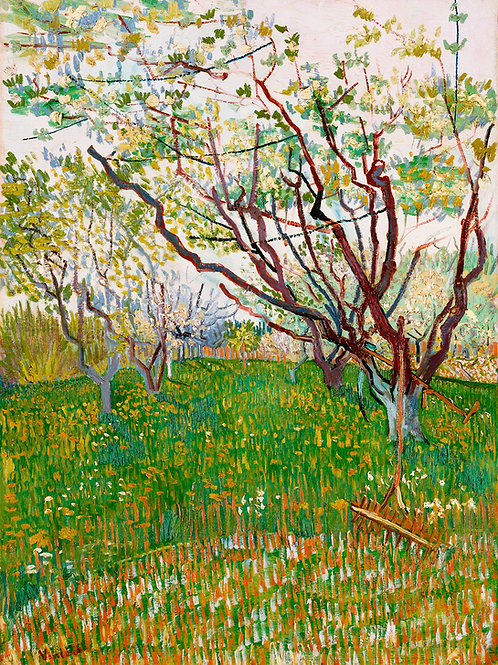 The Flowering Orchard (1888) by Vincent Van Gogh Fine Art Print