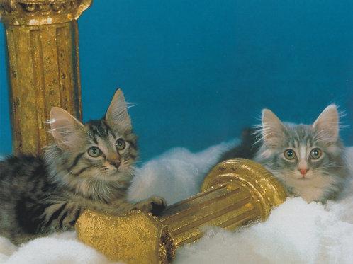 Pillar kittens