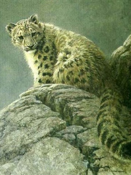 Young Snow Leopard - Lithograph By Robert Bateman