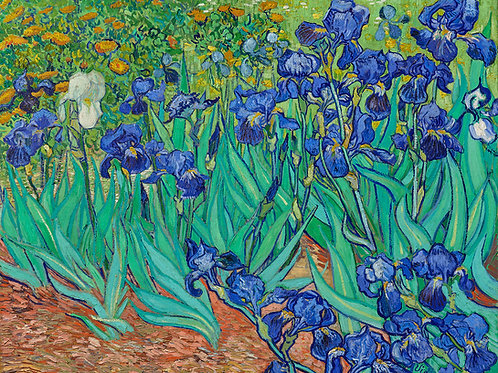 Irises (1889) by Vincent Van Gogh Fine Art Print