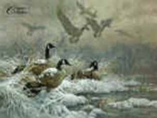 Winter Retreat - Canada Goose - Lithograph By Larry Fanning