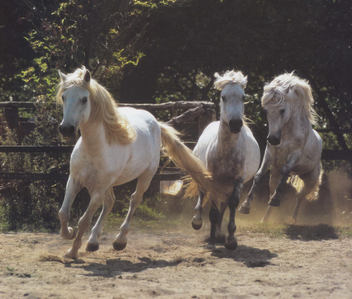 White Horse Stampede