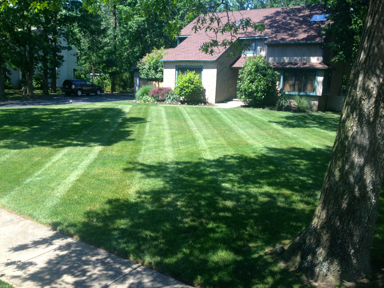 Full Lawn Care Service