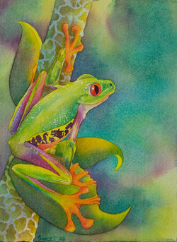"""Forest Frog 11"""" x 15 SOLD ~ prints available"""