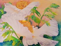 "Matillja Poppy Sunset  38 x 30"" 1200."