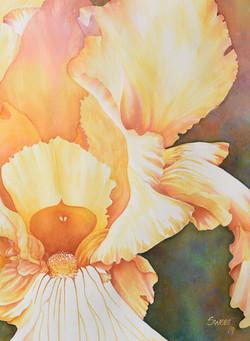 """Yellow Iris 30 x 38"""" 1200."""