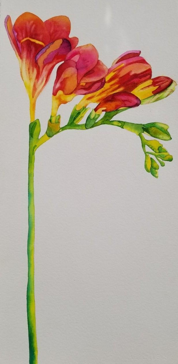 FREESIA LONG STEM - Watercolor - 175.00 SOLD