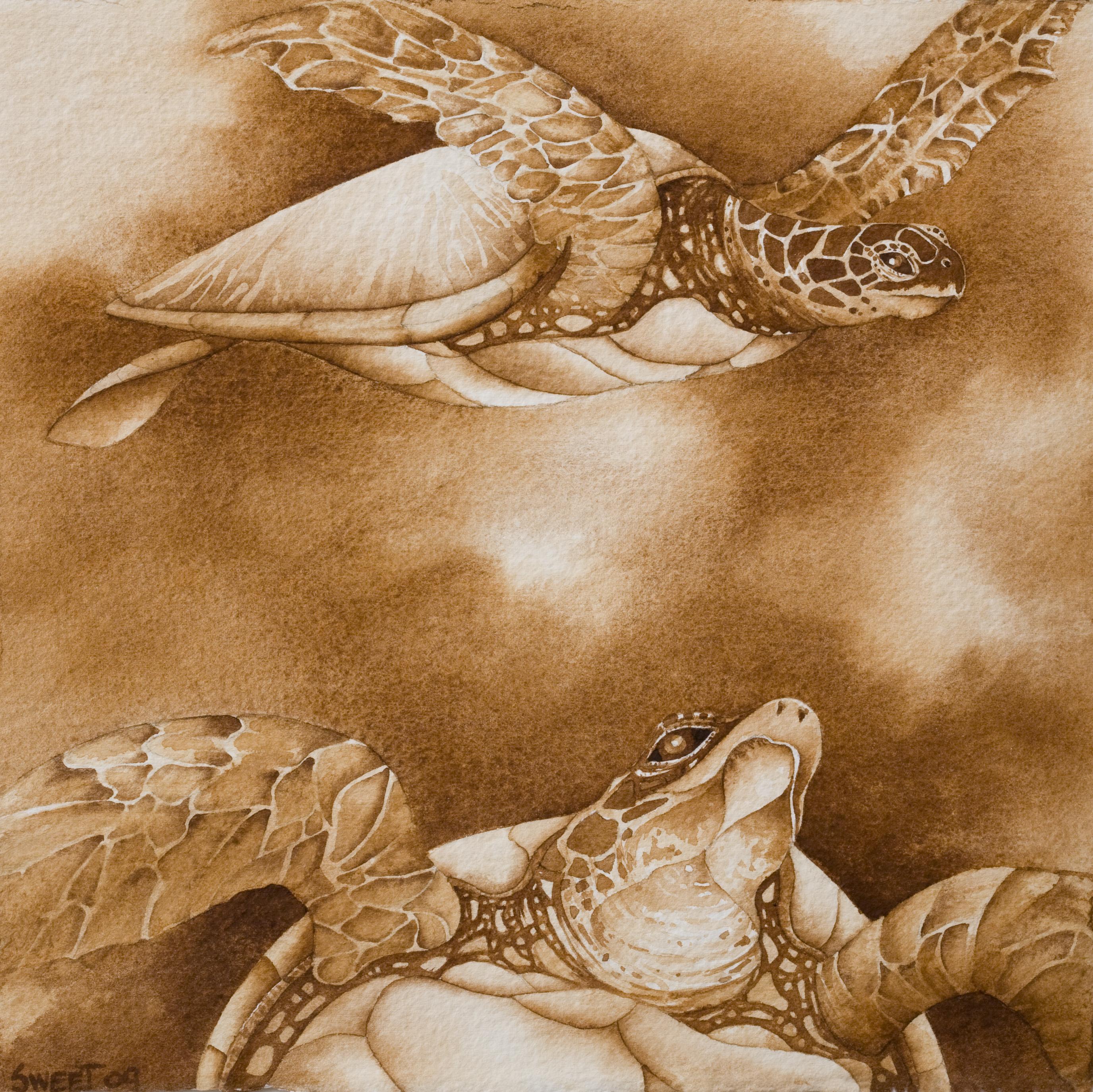 """Sea Turtles 12x13"""" 2011~ 450.00"""