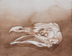 """Bird Skull 5 x 9"""" - 175.00"""