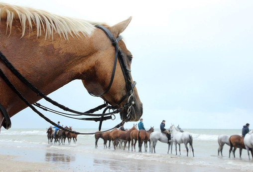 TINDY ET SES POLO PONIES BY JEAN ANTOINE