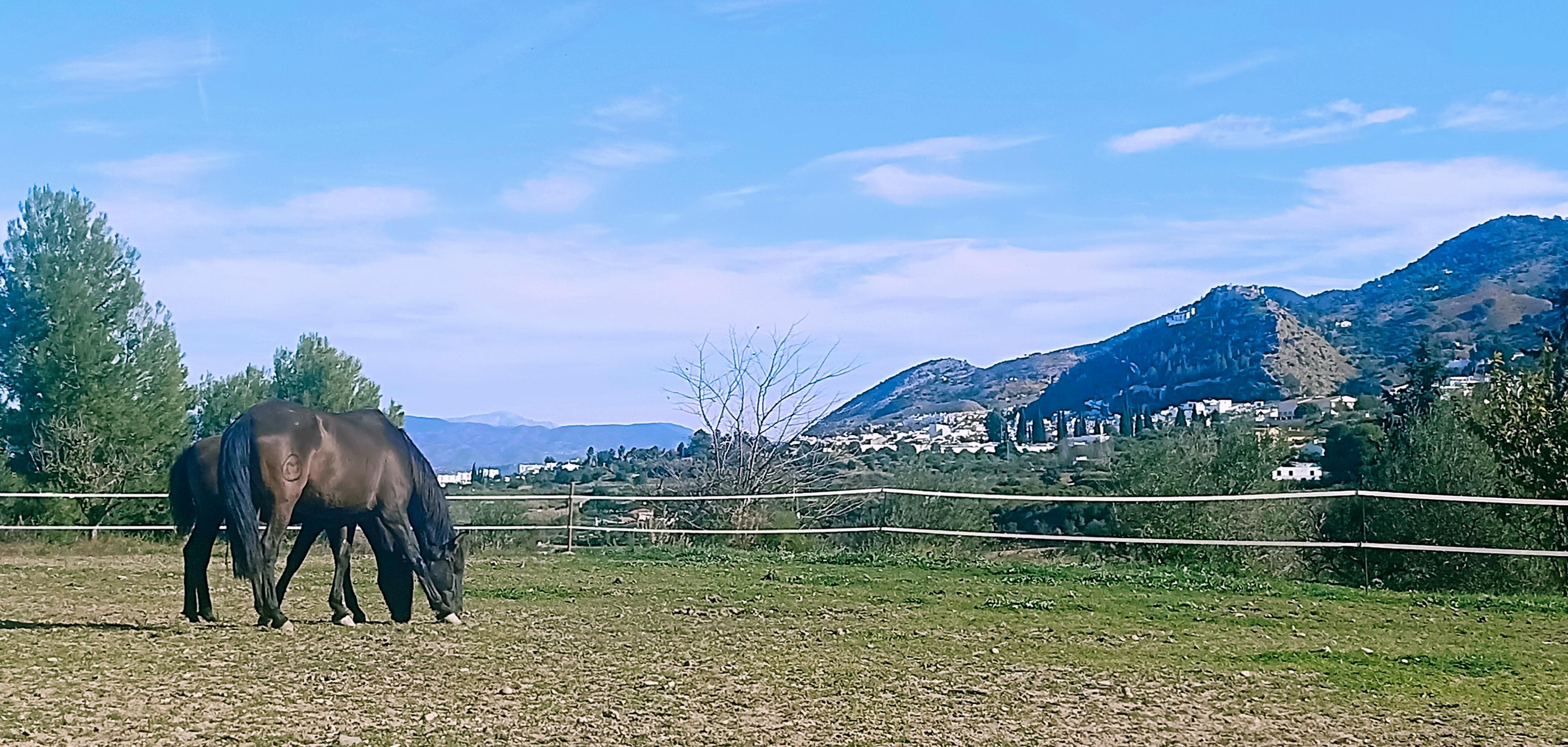 Affera en Aymara