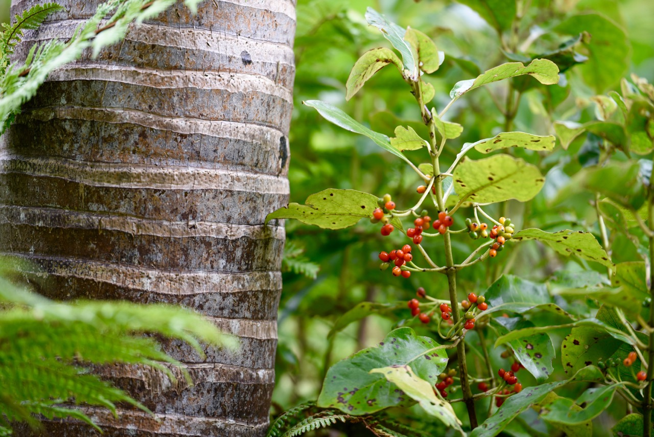 Bush Vegetation