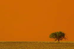 Ancient Tree with Dune