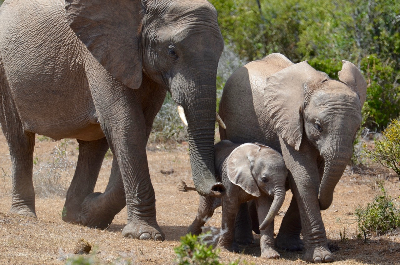 On the way to the waterhole
