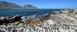 Betty's Bay, South Africa