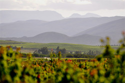 Wine Country, South africa