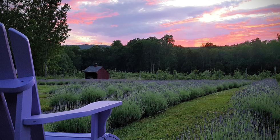 Sunset at the Lavender Farm
