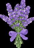 lavender 14.png