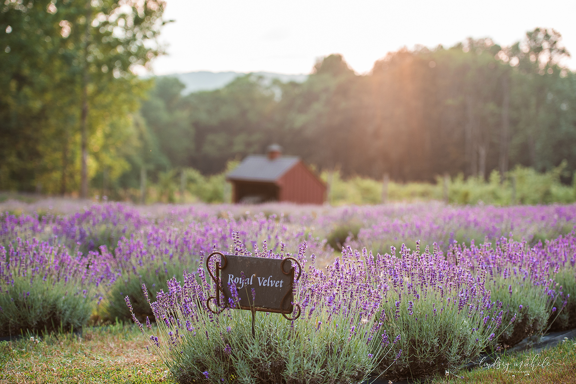 Orchard View Lavender Farm