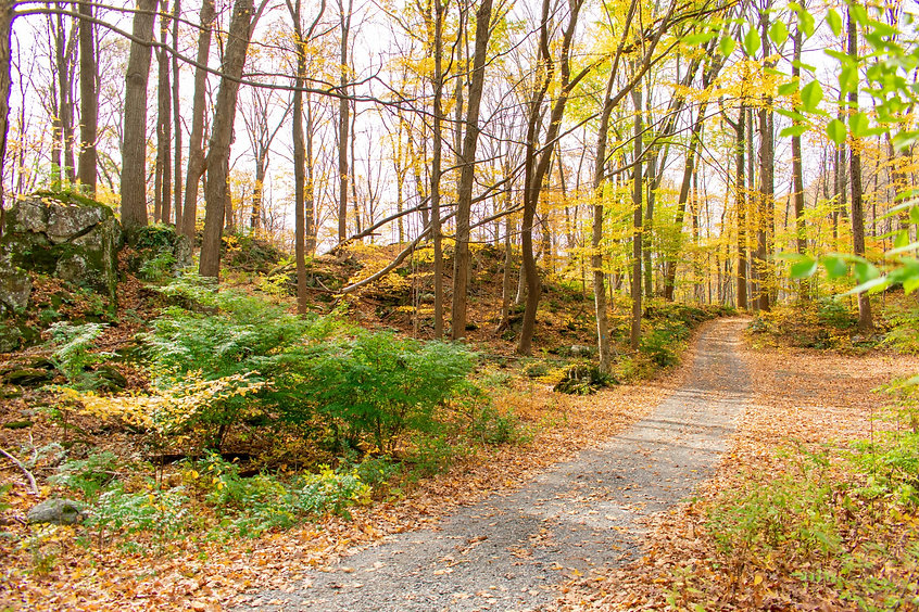 Jenny-Jump-State-Forest-Walking-Path-sca
