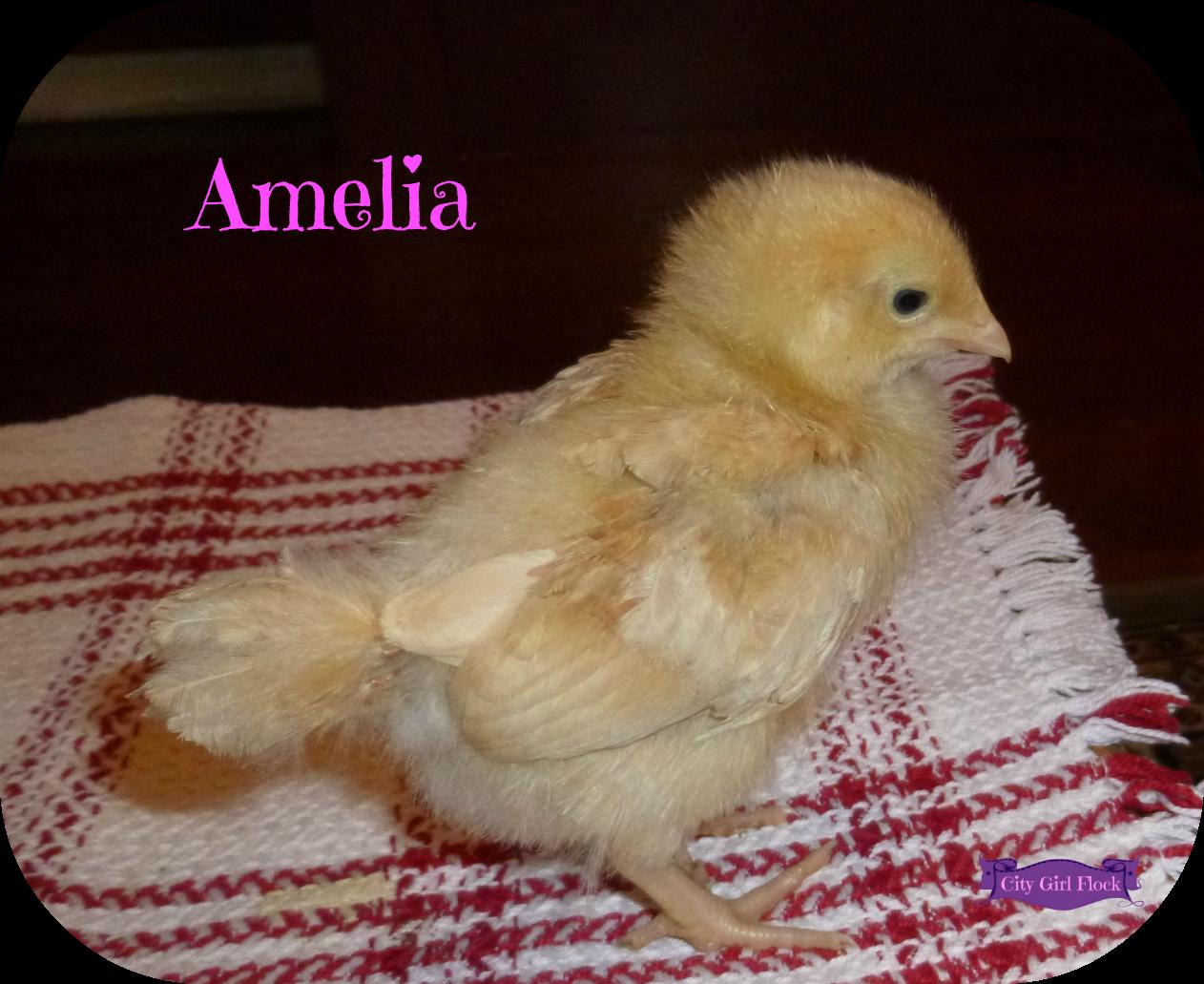 Amelia.png