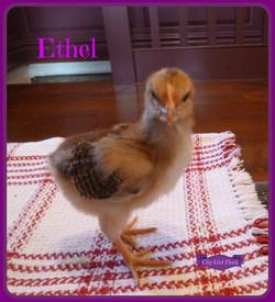 Ethel.jpg