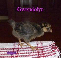 Gwendolyn.jpg