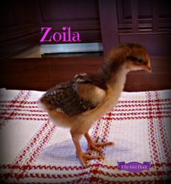 Zoila.jpg