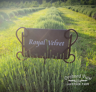 Latest News & Lavender Update - 5/27/2021