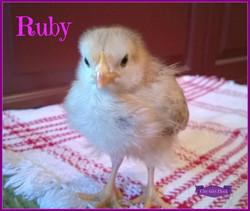 Ruby.jpg