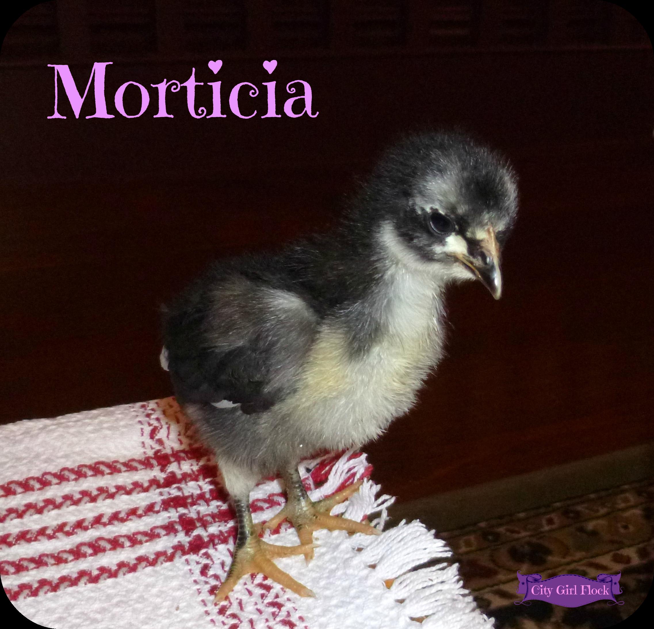 Morticia.png