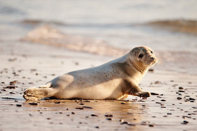 irish_wildlife-28.jpg