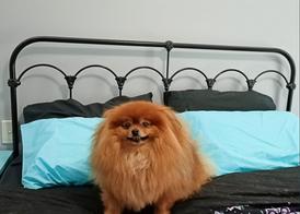 Windsor Cast Bed